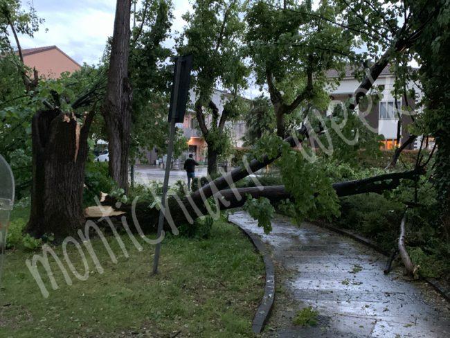 l'albero caduto a Castel Goffredo