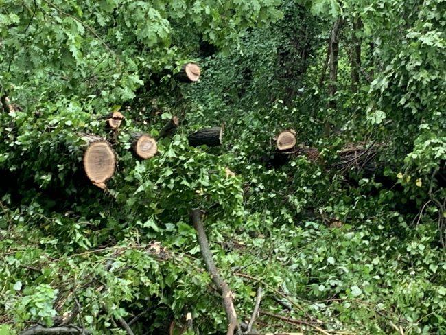 Ripiantumazione in arrivo a Castiglione delle Stiviere, dopo la caduta di oltre 100 alberi l'amministrazione pensa a un piano per nuovi alberi