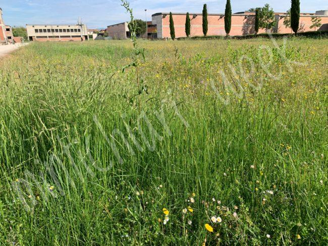 Ancora degrado al cimitero di Castiglione delle Stiviere, in attesa del nuovo gestore che si occuperà del verde e della manutenzione il campo santo vede erbacce e nuove scritte sui muri