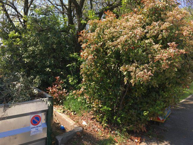Piazzole ecologiche ripulite, le aree di raccolta rifiuti sono state ripulite dall'amministrazione di Castiglione delle Stiviere e da Indecast
