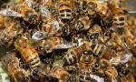 Moria di api: sono arrivati i risultati di Ats