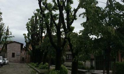 Maltempo, vento e pioggia sul Garda: serre divelte, danni a vigneti ed erbai
