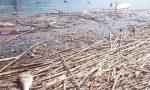 Moria di pesci a Paratico ora le indagini sono in corso