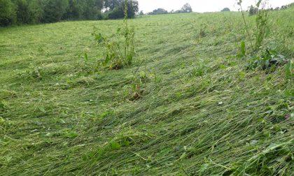 Danni del maltempo: coltivazioni distrutte