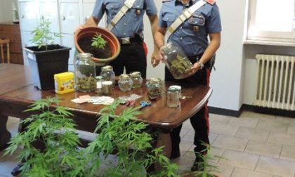 Marijuana e hashish in casa, arrestato un 29enne