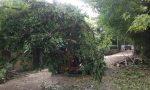 Piante pericolanti, chiusa a Montirone via Molinara