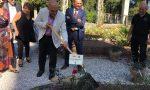 La rosa d'Annunzio è ora parte del roseto al Vittoriale degli Italiani