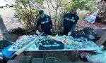 Denunciati 130 bracconieri e salvati migliaia di uccelli