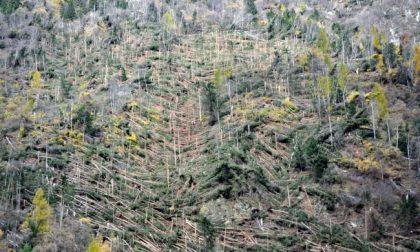 Dalla Regione 3 milioni per il ripristino delle foreste