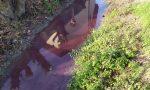 L'acqua della roggia di Manerbio si tinge… di viola