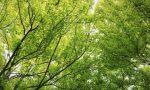 Nuovi progetti e piantumazioni per aumentare il verde pubblico a Chiari