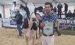 Sant'Apollonia 2020, ecco le migliori vacche da latte (una è di Chiari)