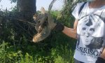 A Dello è ripartita l'operazione #campagnapulita