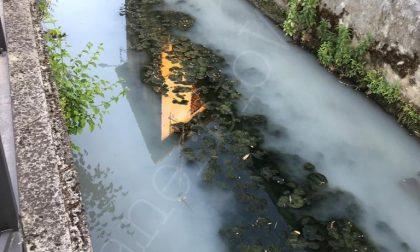San Gervasio moria di pesci nella roggia