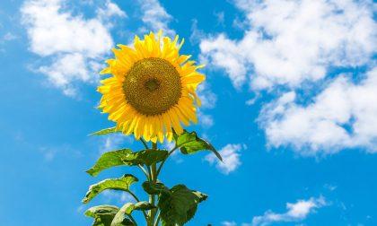 Weekend estivo: tempo soleggiato e graduale rialzo termico   Meteo Lombardia