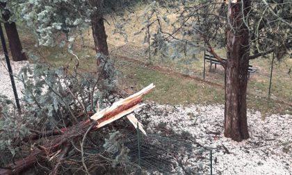 Strade allagate e alberi crollati, tutti i danni del maltempo