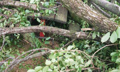 Maltempo, alberi e giochi distrutti all'Infanzia Collodi – FOTO