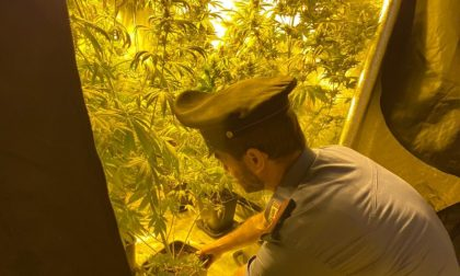 """Quando coltivare """"erba"""" è un affare… di famiglia: in arresto in sei"""