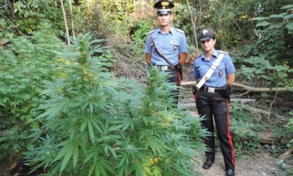 Scoperta piantagione di marijuana sul Monte: arrestati i quattro giovani di Erbusco