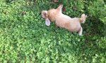 Quaranta coniglietti morti a Villa Grasseni di Flero