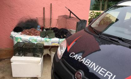 """Operazione """"Pettirosso"""", salvati migliaia di esemplari protetti e denunciati oltre 100 bracconieri"""