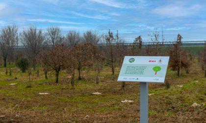 Mille nuovi alberi a Chiari grazie al sostegno di E.On
