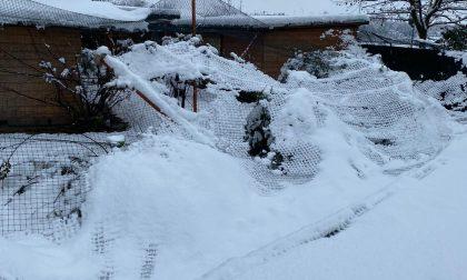 Neve e maltempo provocano il crollo del gattile – FOTO