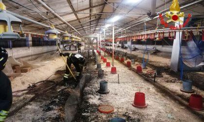 Incendio di un capannone ad Alfianello: muoiono settemila tacchini