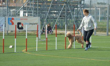 La manifestazione di Dog Agility incanta Sirmione prima della zona rossa