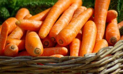 In regalo con il giornale questa settimana ci sono i semi di carota