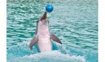 Il Ragionier Capoferri spiega il coaching con la parabola della focena