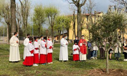 Un ulivo all'oratorio per ricordare don Luca
