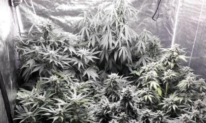 Blitz della Polizia, scoperte dieci piante di marijuana: denunciato 29enne