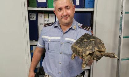 Tartaruga di una specie protetta salvata dalla Polizia Locale di Iseo