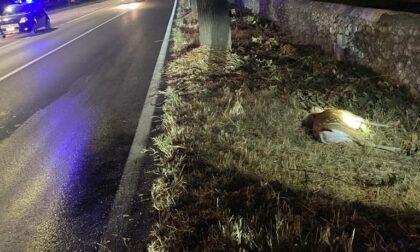 Trovato capriolo morto sul ciglio della strada