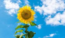 Torna il bel tempo nel fine settimana in Lombardia   Previsioni meteo