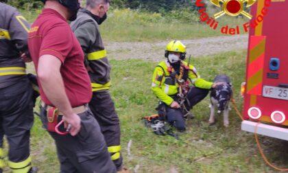 Husky morso da un rettile, intervengono i Vigili del Fuoco per il recupero