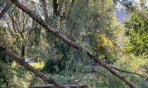 Maltempo e alberi caduti: chiuso il percorso Nord delle Torbiere