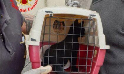Vigili del Fuoco: il video del recupero di un gattino intrappolato in un canna fumaria